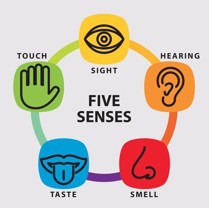 Great Examples Of The 5 Senses In Writing